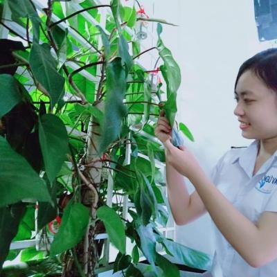 Võ Thị Kiều Trang